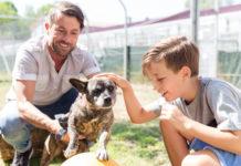 conocer a tus perro