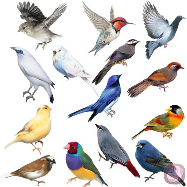 Aves similares a las que aparecen en el libro Aves del paraíso