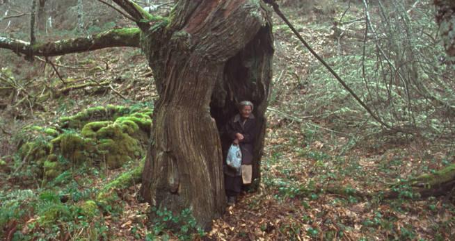 Benedicta se refugia de la lluvia en un árbol hueco