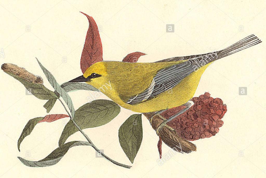Ilustración de James Ellsworth para la novela Aves del paraíso