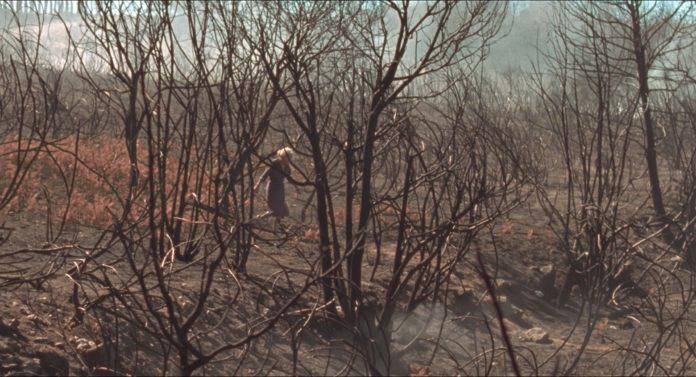 Benedicta después de la desolación, Lo que arde
