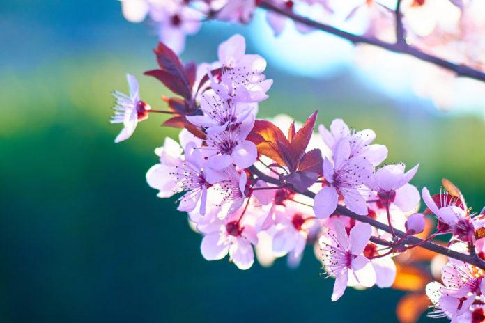 Portada para el libro El secreto de las flores
