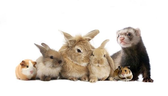 Animales exóticos. Tips para conejos y roedores