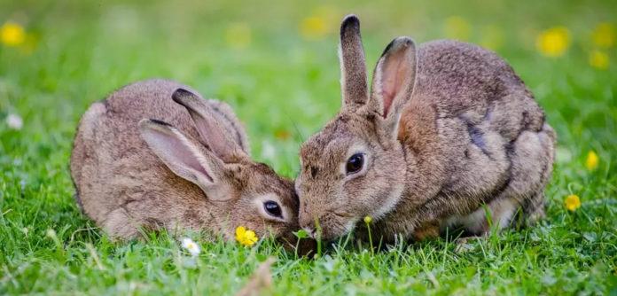 Conejos, Tips para animales exóticos