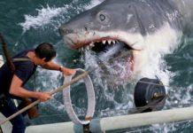 El tiburón contra Brody