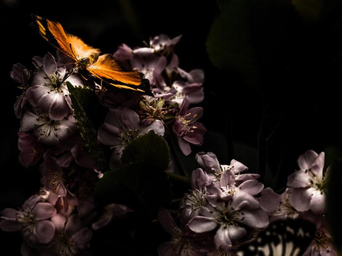 Foto para la portada de la reseña del libro El vuelo de la mariposa de David Olivas libro