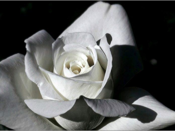 """Portada para la reseña del libro """"Gardenia"""" de Zelá Brambillé"""