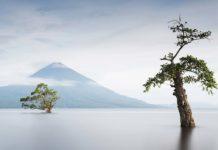 árbol paraíso
