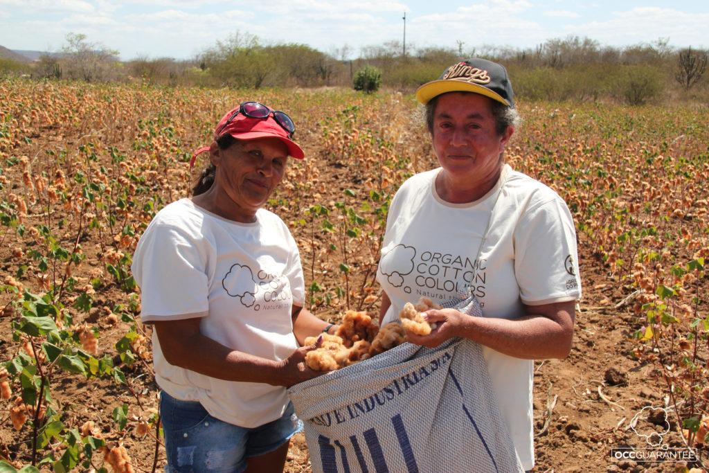 Cultivadoras de algodón en Brasil