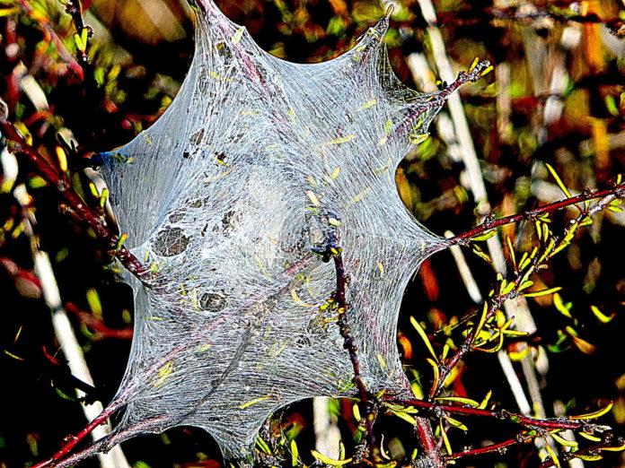 Portada para la reseña de El nido de la araña de Maria Frisa