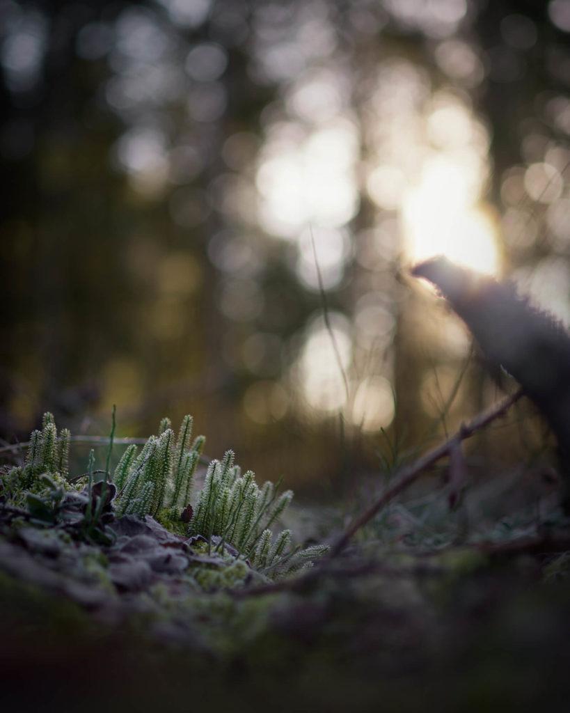 Fotografía de Linus Englund
