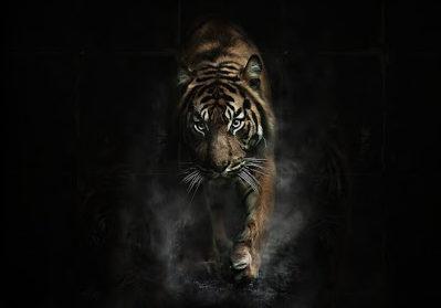 Foto de reseña para El tigre nocturno de Yangsze Choo