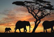 Reseña de El santuario de los elefantes de Nativel Preciado